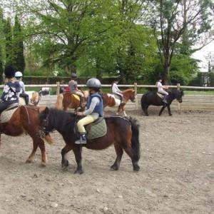 Poneys Vigoulet-Auzil