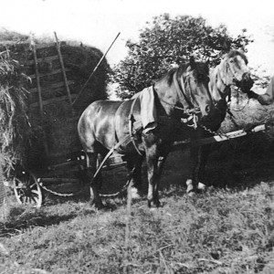 chevaux champs